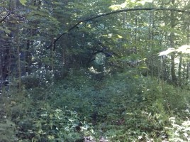 Food Forest 4 Trail